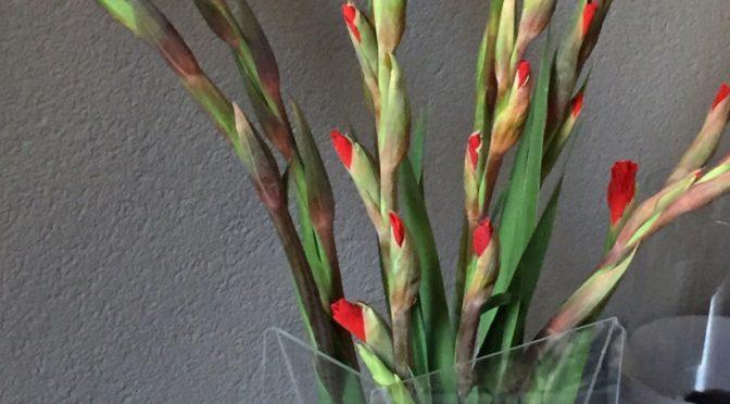Gladiolen uit Blessures en bloemen kort verhaal door Marc Couwenbergh